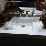 蛇口から水を飲むソマリーズ