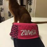 「きなこ」、ZUMBAの曲が好き…