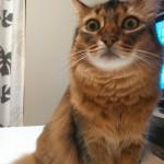 だいず、猫風邪がだいぶ治る(^^)v…