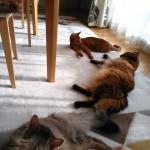 猫のみち…