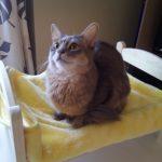 猫ベッドを製作…